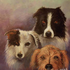 Three Rescued Dogs by Sean Conlon