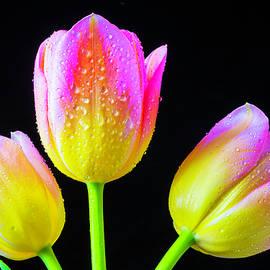 Three Special Tulips - Garry Gay