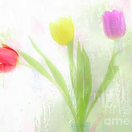 Hal Halli - Three Tulips in the Rain