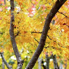 Nicholas Blackwell - Through the Canopy