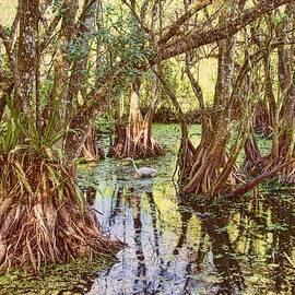 Karen Regan - Through The Mangroves