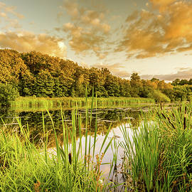 Through The Reeds by Nick Bywater