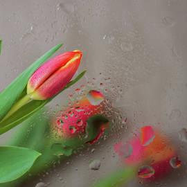 Svetlana Iso - Through the tulips. Square