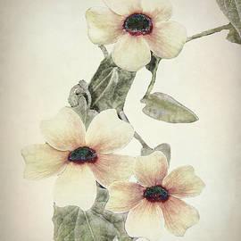 Thumbergia by Marcia Colelli