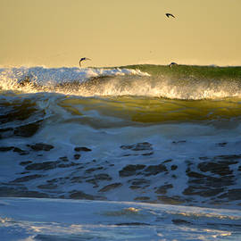Thundering Surf - Cape Cod National Seashore by Dianne Cowen