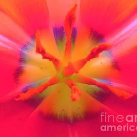 Honey Behrens - Tie-Dyed Tulip