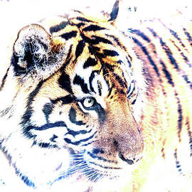 Kate Brown - Tiger Abstract