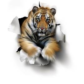 Smetek - Tiger, Artwork