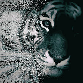 Tiger Dispersion - Martin Newman