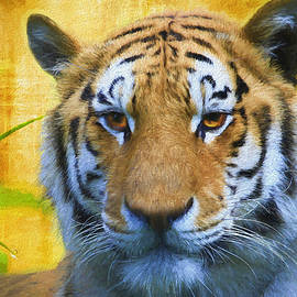 Tiger in the Bamboo - Painting by Ericamaxine Price