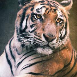 Tiger No 6