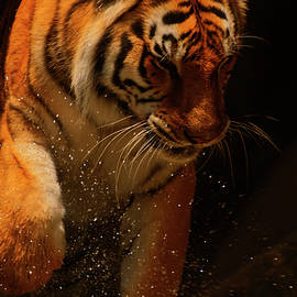 Tiger Playing In The Water  by Chris Flees