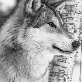 Athena Mckinzie - Timber Wolf