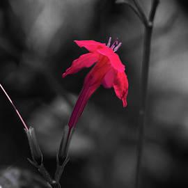 Tiny Beauty 4 by Susan Molnar
