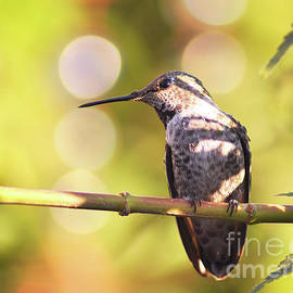 Debby Pueschel - Tiny Bird Upon a Branch