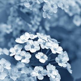 Jennie Marie Schell - Tiny Spirea Flowers in Blue