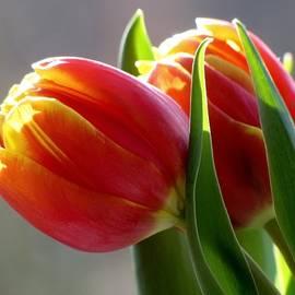 Tiptoe Through the Tulips by Lori Lafargue