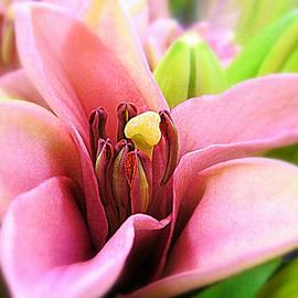 Bonita Brandt - Tiptoeing through the Tulips