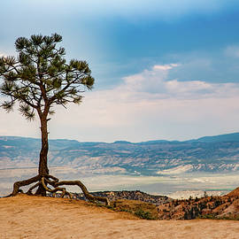 Lisa Lemmons-Powers - Tiptoeing Tree in Bryce Canyon