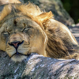 Rob Sellers - Tired of Lion Here