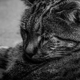 Tired ol' Cat by Zach Johanson