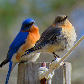 Togetherness by Dianne Cowen Photography