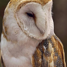 Too Cute To Give A Hoot by Theo O'Connor