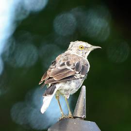 William Tasker - Too Still A Mockingbird