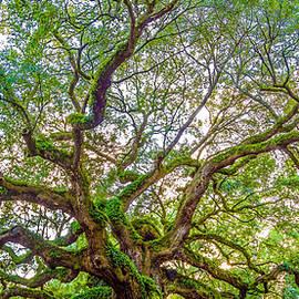 Top Of The Angel Oak Tree Charleston Sc by John McGraw