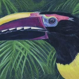 Jenny Andreoli - Toucan Discovery