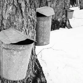 Traditional Maple Sap Collection Galvanized Buckets Vermont - Edward Fielding
