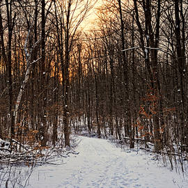 Winter Trail Sunset by Phill Doherty