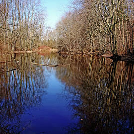 Debbie Oppermann - Tranquil Pond