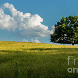 Reid Callaway - Tranquil Solitude Billowing Clouds Oak Tree Field Art