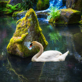 Tranquility by Harry Spitz