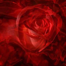 Serena Ballard - Translucent Rose