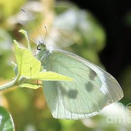 Transparent in White by Jackie Tweddle