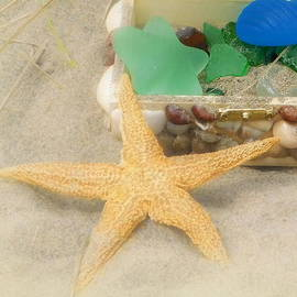 Treasures of the sea  by Karen Cook