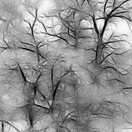 Tree Abstract by Mellissa Ray