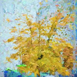 Rachel Bilodeau - Tree Abstract
