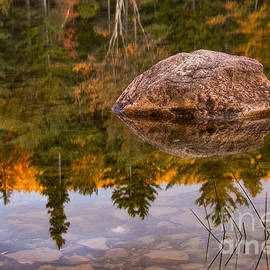 Tree and Rock Reflections by Bob Phillips