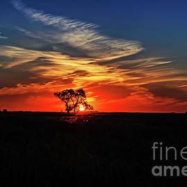 Tree at sunset by Viktor Birkus