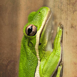 Tree Frog  by Kay Brewer