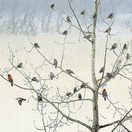 R christopher Vest - Tree Full Of Siskins With Finches