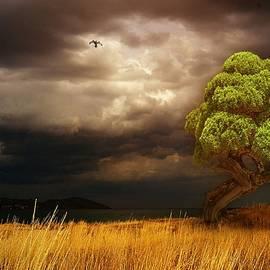 Yuri Hope - Tree in a Quiet Bay