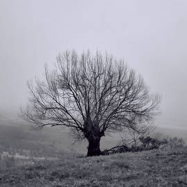 Tree In Black And White by Pamela Walton