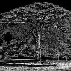 Tree in England by Walt Foegelle
