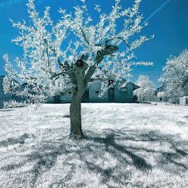 Norman Gabitzsch - Tree in Krska Vas