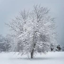 Jack Milton - Tree in Snowy Field