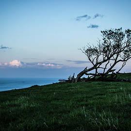Tree In Twilight 1 by Raelene Goddard